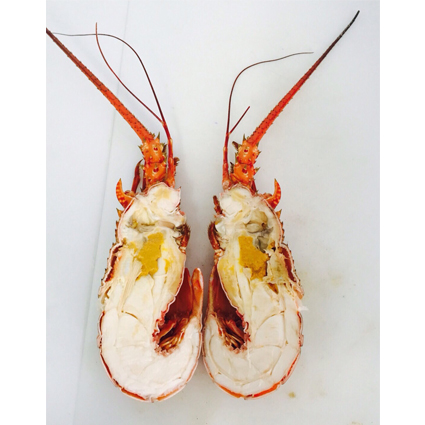 Cooked Lobster(Half-Cut)