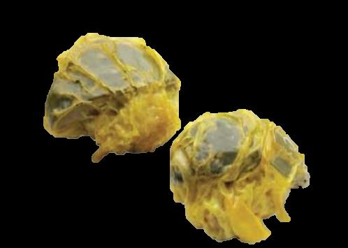 Mushroom Mai